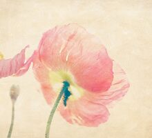 Painterly Poppies In the Sun by Virginia Sanderson