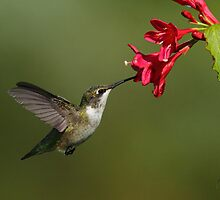 Float Like a Butterfly; Drink Like a Hummingbird :) by Bill McMullen