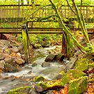 Mossy Old Bridge by Dale Lockwood