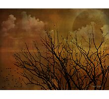At End of Day Photographic Print