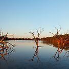 Sunrise at Cardenyabba Lagoon, Kilcowera Station, Queensland by Blue Gum Pictures