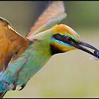 Rainbow Bee-Eater by John Van-Den-Broeke