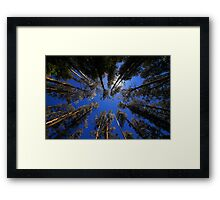 in the middle of the forest in color Framed Print