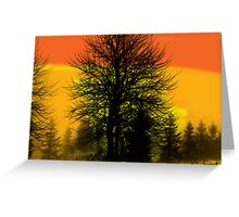 Silhouette trees at sunset Greeting Card
