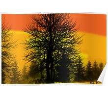 Silhouette trees at sunset Poster