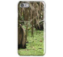 Cypress Stump iPhone Case/Skin