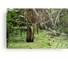Cypress Stump Metal Print