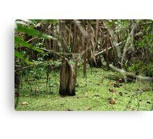 Cypress Stump Canvas Print