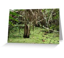 Cypress Stump Greeting Card