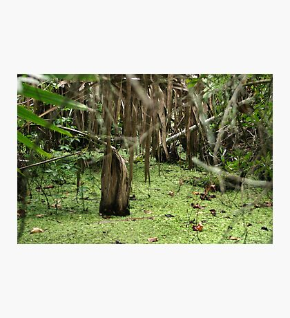 Cypress Stump Photographic Print