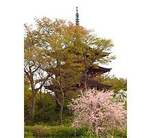 Oka-dera temple, pagoda Photographic Print