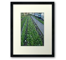 Pansies, Posts and Parked Cars Framed Print