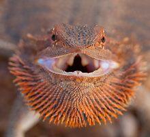 Smiley - Central Bearded Dragon by Haggiswonderdog