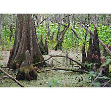 Swamp Floor Photographic Print