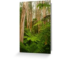 Tarra-Bulga National Park Greeting Card