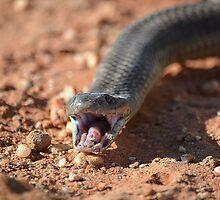 Brown Snake head by Mel  LEE