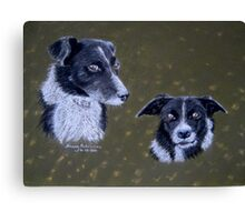 Border Collies Canvas Print