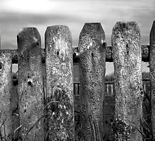 Fence 2 by Robert Meyer