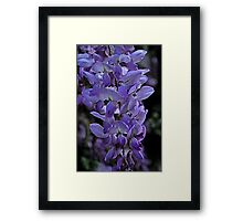 Painted Wisteria Framed Print