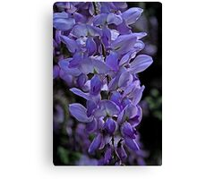 Painted Wisteria Canvas Print