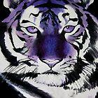 Purple Tiger by Sarah Mokrzycki