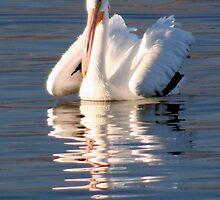 White Pelican by Jo Nijenhuis