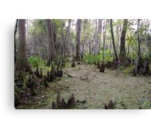Swamp Lands Canvas Print