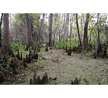 Swamp Lands Photographic Print