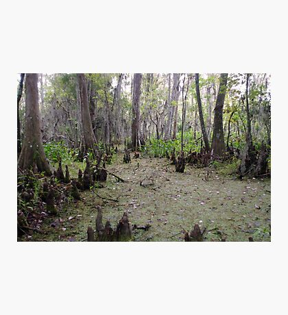 Swamp Lands Photographic Print