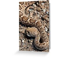 Rattlesnake near Joshua Tree entrance. Greeting Card