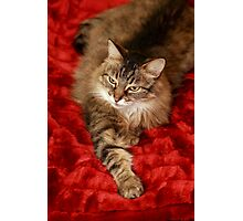 Little Miss Poser Photographic Print