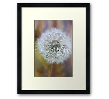 Beautifully delicate Framed Print
