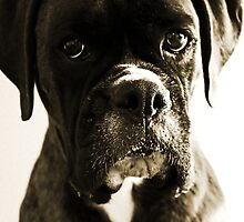 Luthien's Portrait In Sepia -Boxer Dogs Series- by Evita