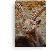 Ibex Buck Canvas Print