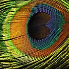 Eye of the Peacock by Derwent-01
