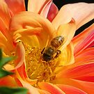 Golden Nectar by shutterbug2010