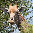 Cheeky Giraffe by Will Hore-Lacy