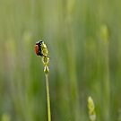 Bug-robatics! by Helen Vercoe