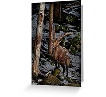 Ibex on Hill Greeting Card