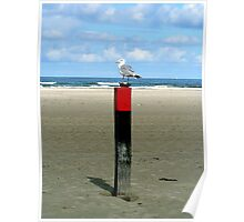 Rusty lock case guarded by a Seagull  Poster