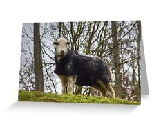 Herdwick Sheep Greeting Card