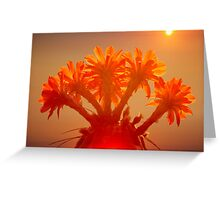 Desert Flower Greeting Card