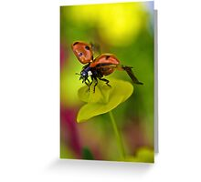 Common ladybird Greeting Card