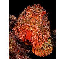 Scorpionfish Portrait Photographic Print