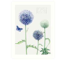 Echinops and Common Blue Art Print