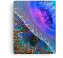 Crown Jellyfish Close Up Canvas Print