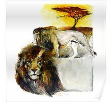 Africa - Lion Veldt Poster