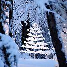 Christmas Tree by Duane Salstrand