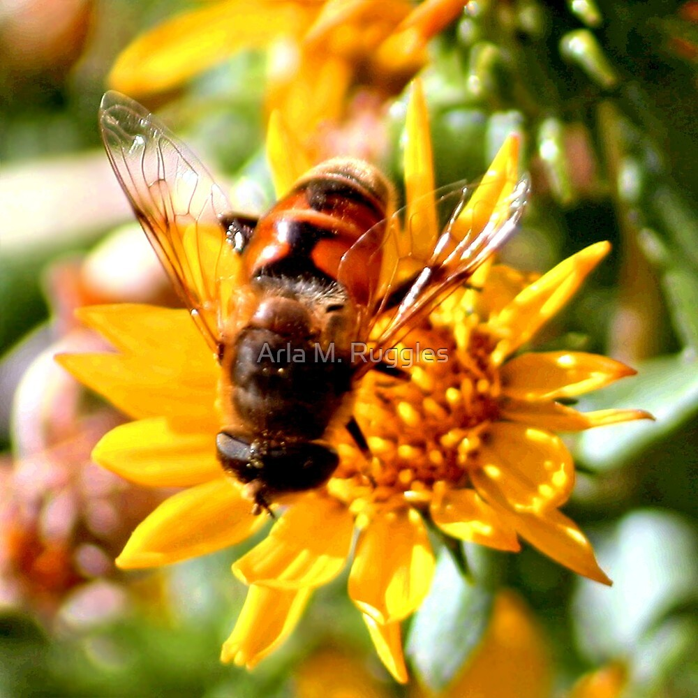 Hoverfly by Arla M. Ruggles