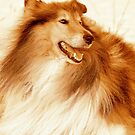 The lead dog by Alan Mattison